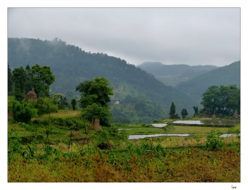 Photo de voyage organis en chine n 17 pr s des rizi res for Voyage organise jardins anglais